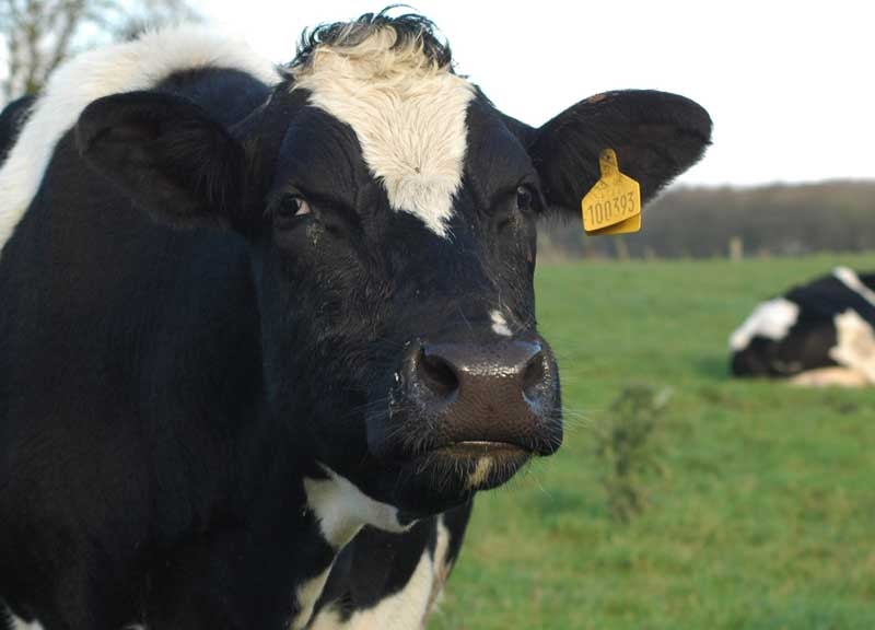 worldview news - interactive 3D enagement platform provided to dairy farmer to reduce energy